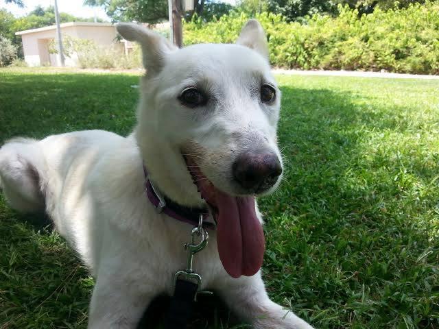 הכלבה פרשס מחייכת למצלמה מתוך עמוד הפייסבוק של עופרה רוזנשיין