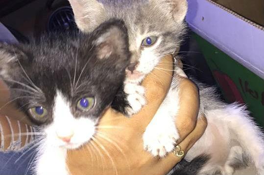 גורי חתולים שניצלו ממדורות לג בעומר