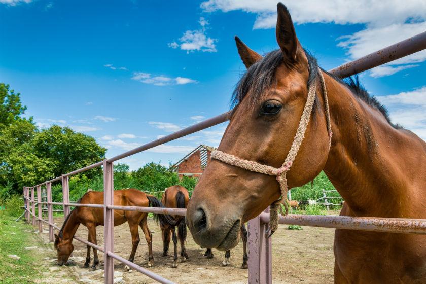 חוות סוסים (אילוסטרציה שאטרסטוק)