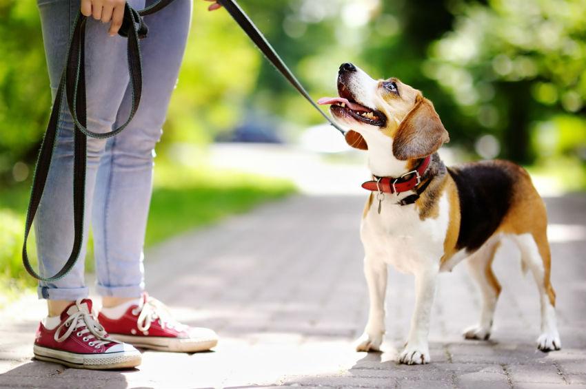 כלב עם רצועה בפארק