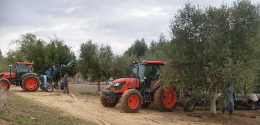 חוות רעים, צילום: אלבינה גלצר